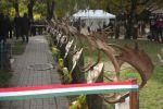 b_150_150_16777215_00_images_stories_gyulaj_damszobor_0391.JPGk.JPG