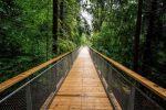 b_150_150_16777215_00_images_stories_kulfold_worldlongesttreetopwalkway4k.jpg